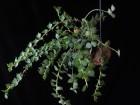 蝸牛殻裏的植物