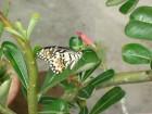 美麗動人的蝴蹀