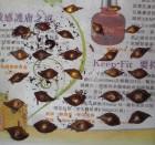 芙蓉酢醬草