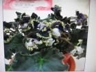 2011 flower show hahaha ^^