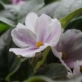 Ness' Spring Blush