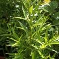 藥用花草樹木