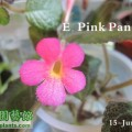 E. Pink Panther