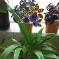 半水種semi-hydroponic