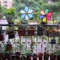 2012 MY FLOWERS