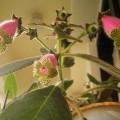 K. Digitaliflora蟲蟲 - shared from maplejoe