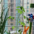 窗台上的菜園