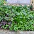 Web Plants