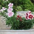 2011年5月日本種子植物