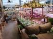 灣仔區鬧市有關苦科植物的新朝聖地