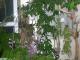 心得分享 & 香港專業蘭園的餘輝 1