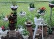 日本小花園(15/5更新:玫瑰盛放)