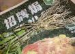 長生蘭枝條變軟