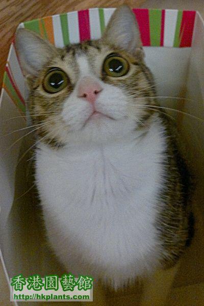 cat2A.jpg