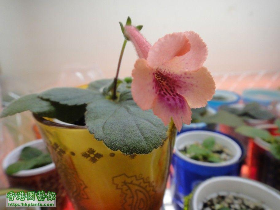 S. Nora\'s Orange Blossom-b.jpg
