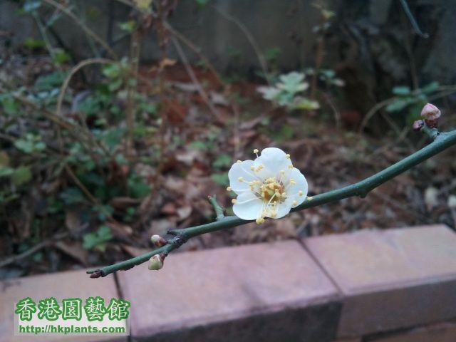 2012-01-24 11.10.54.jpg