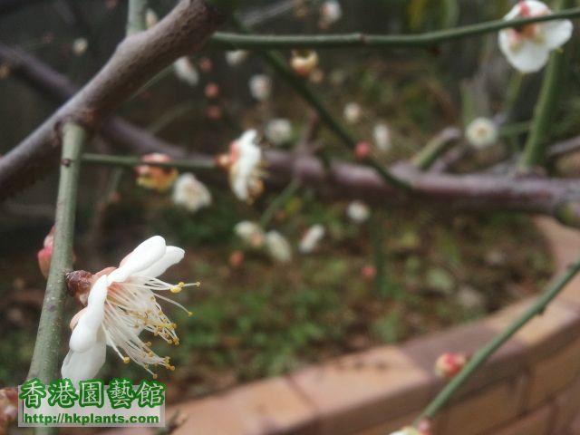 2012-02-01 12.00.10.jpg