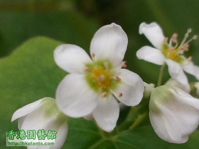 garden_20120116_101541 (Small).jpg