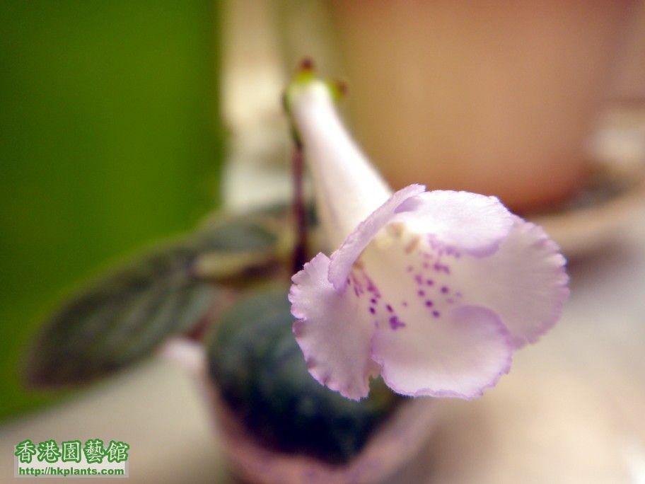 S. HCY\\\'s Purple Mist 跑色版 -c 21 Sept 2012.jpg