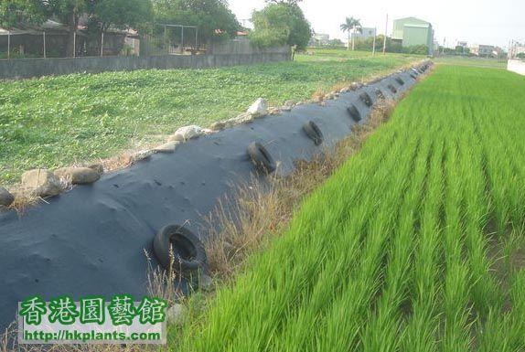 Grass Net.jpg