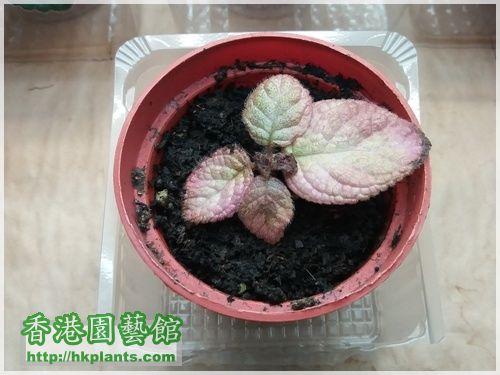 Strawberry Patch-2016-007.jpg