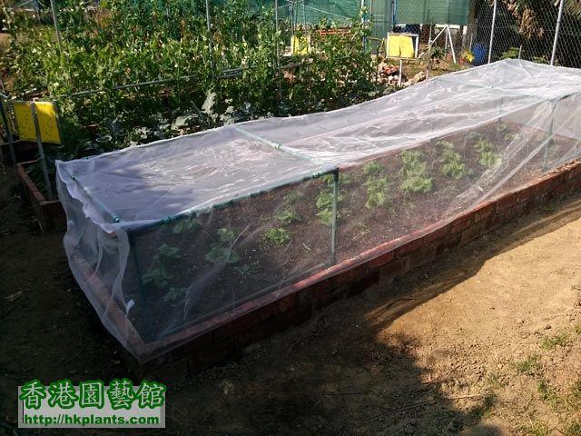 4x1米防蟲