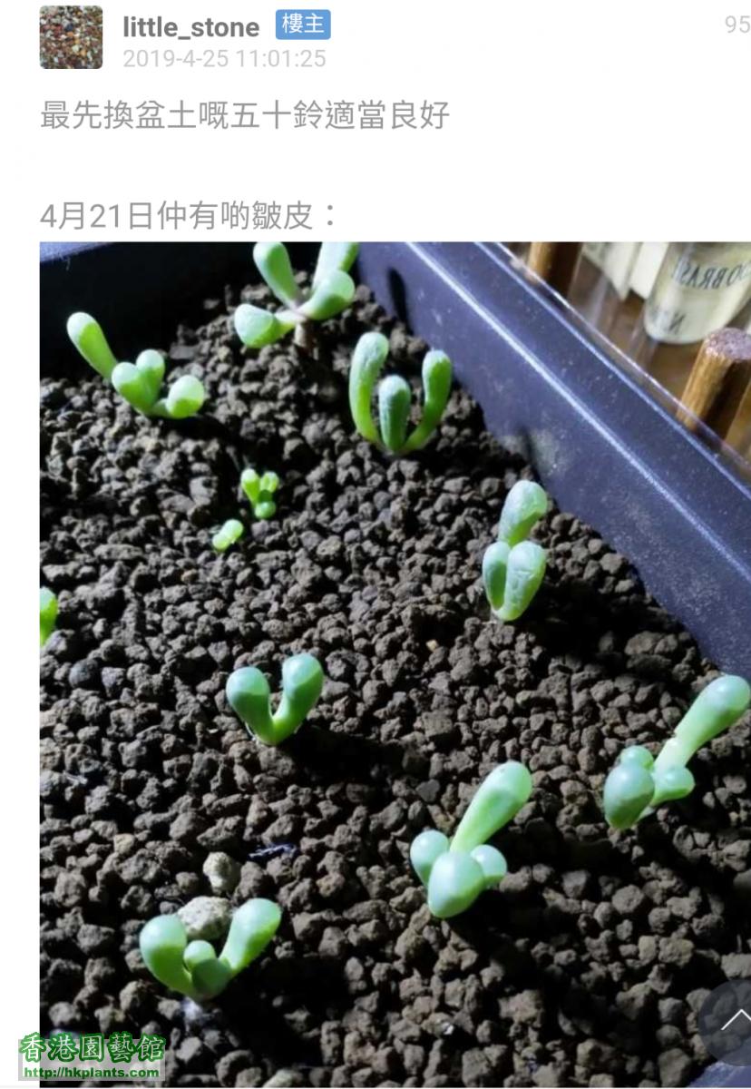 Screenshot_20200204-131535~2.png