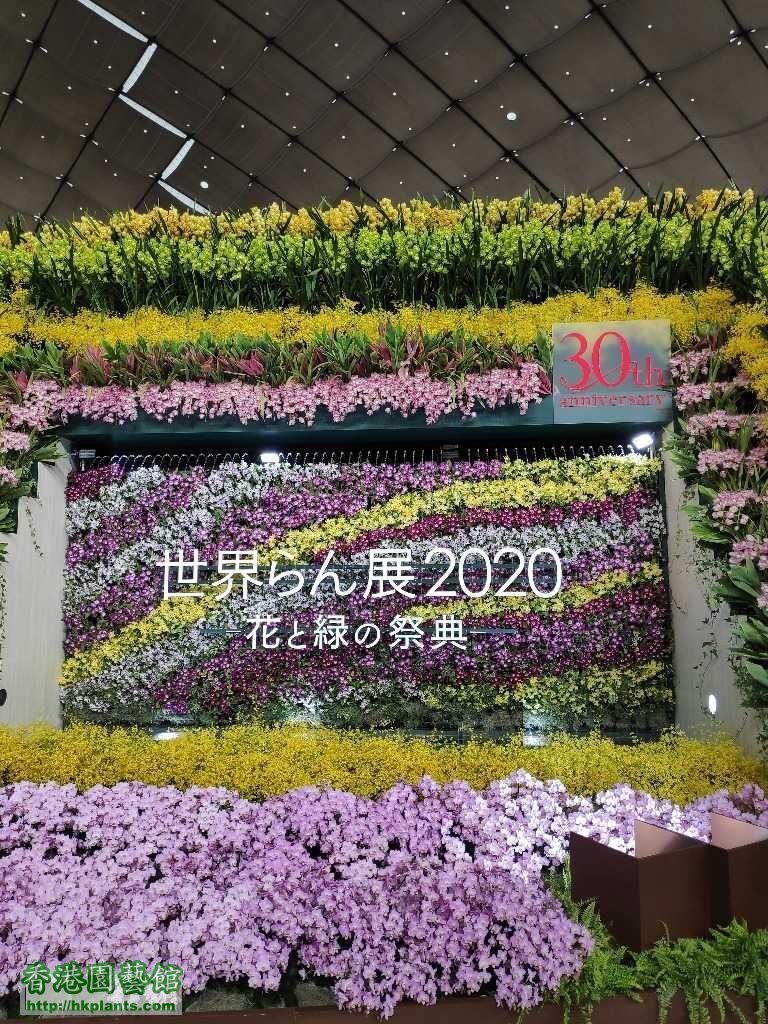 東京國際蘭展2O2O