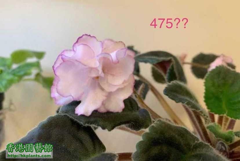 6EE3D471-BA48-4C80-A400-60AA03AB0399.jpeg