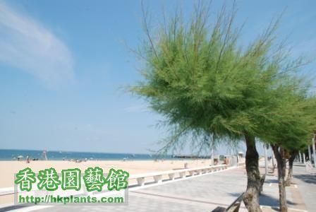 DSC_9782_tree.JPG