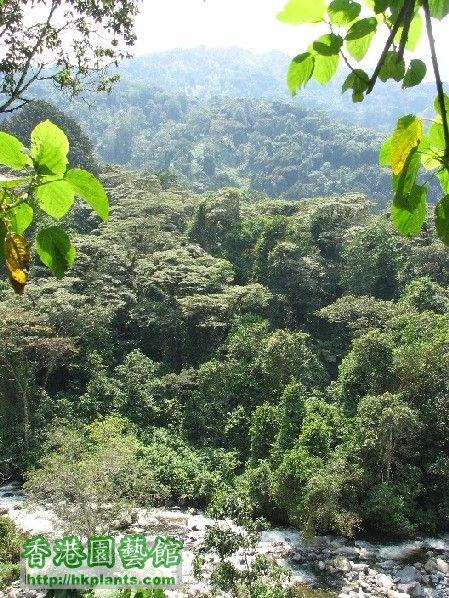 圖03-低地熱帶森林氣候區.JPG