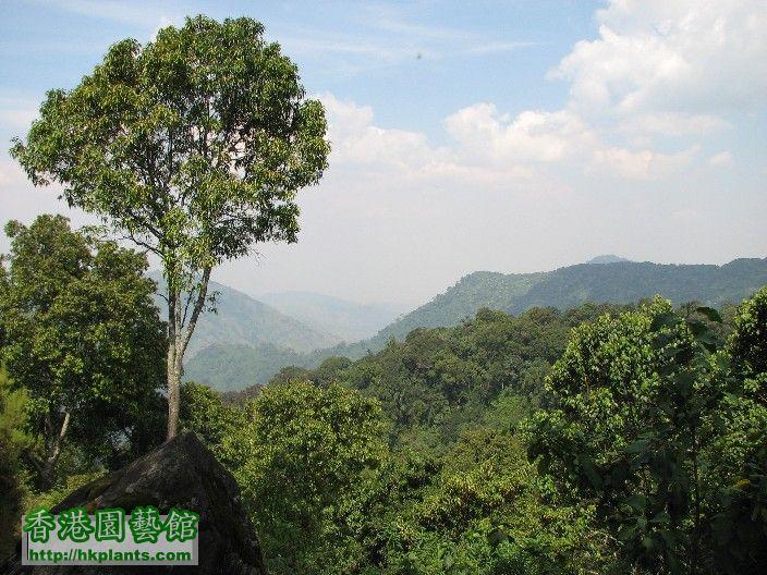 圖12-溫帶森林氣候區.JPG