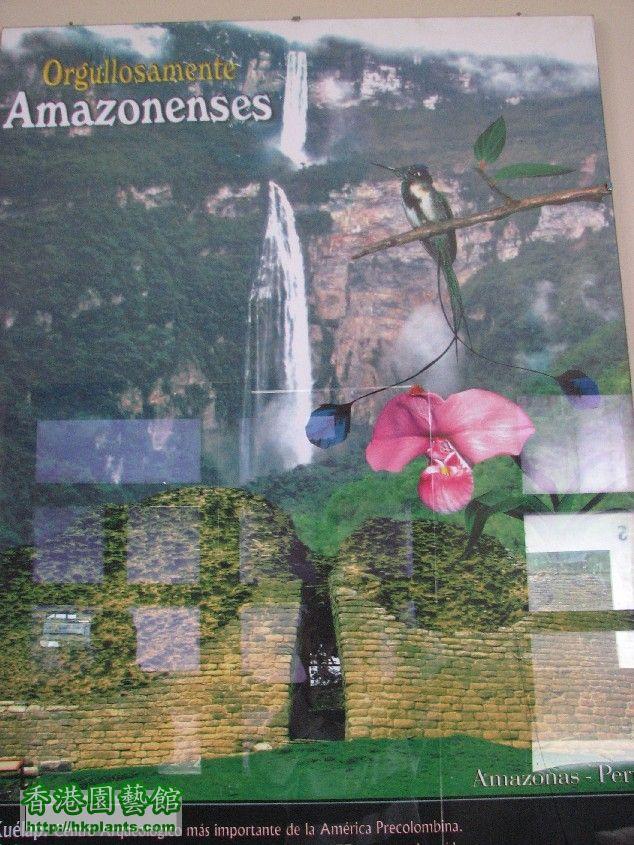 圖 53-位於亞馬遜省部首府查查普爾市內酒店內展示的海報.JPG