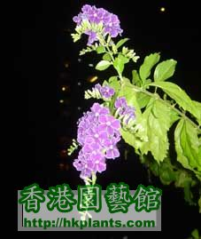 DSC01644a.jpg
