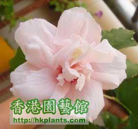 DSC01880a.jpg