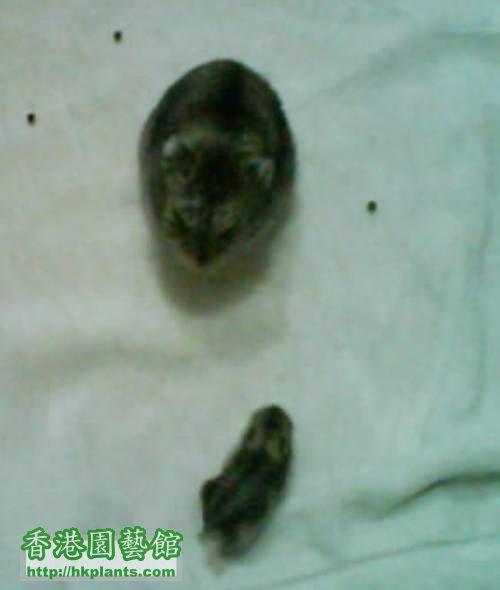 鼠爸爸與鼠寶寶