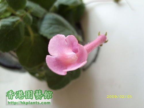 ap_20090205021758640_jpg.jpg
