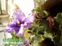 new violet 2012........