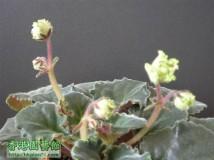 218 朱古力 ( Update 10-04-2012 )