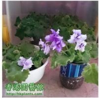 Violet2012 - 六胞胎老二發力