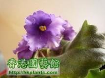 new violet 。。。