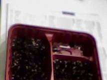 我的環保育苗箱