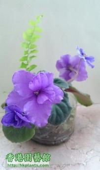 Violet 2012- 有趣