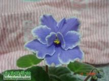 在蘭姐處買的161小苗現成長開花了