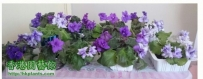 Violet2012- 仿似小小小花展…