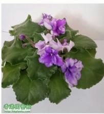 Violet 2012-sep2016