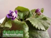 new violet ........