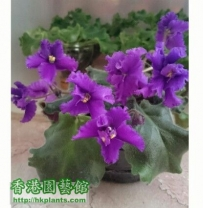 Violet2012- 花兒朵朵