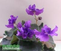 new violet....2015