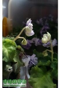 Violet2012-互相欣賞